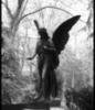 ayngelcat: (Angel statue)