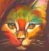 ayngelcat: (rainbowcat)