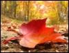 disgruntledgirl: AutumnLeaf (AutumnLeaf)