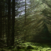 songsofemelnuvi: A forest with the sunlight just right so as to cast shadows (environment)