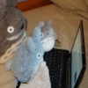 martyna: Totoro Plushies in front of netbook (totoros)