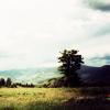 bedpostqueen: (landscape)