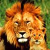 pat_le_lion: (papa et lionceau)