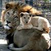 pat_le_lion: (papa et fiston)
