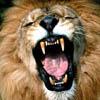 pat_le_lion: (pas content)