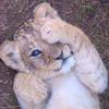 pat_le_lion: (baby caché)