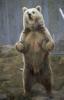 russian_vodka: (Happy Bear)