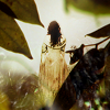 goodbyebird: Kahlan stands in the forest in her white Confessor's gown. (LoTS Mother Confessor)