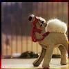 ostralegus: (singing camel)