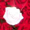 cyberpink: (Utena: Rose)