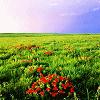 sasha_davidovna: (Default)