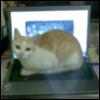 boysie: (laptop)