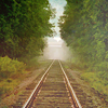 dalegardener: Railways tracks between trees (Railway tracks)