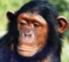 chimpan_a: (default)