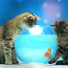 yvi: (Cats - fish bowl)