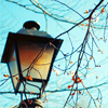 susan_voight: lantern against blue sky and tree branches (Default)