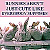 kis: rabbits with anya's lyric from OMWF - bunnies ain't just cute (General: bunnies)