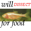 "ext_34193: Blind cave fish, words ""Will dissect for food"" (Blind Cave Fish)"