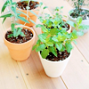 gandaki: potted plants (potted)