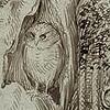 solanyxe: (Owl)