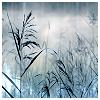 eirikr: (snowy reeds)