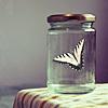 from_wonderland: (butterfly in a jar)