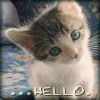 brandied_plum: (kitty: hello!)