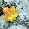 cruisedirector: (autumn)