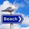 solosundance: (beach-seagull)