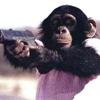 inverarity: (monkey)