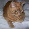 kivrin: An unamused cat (Caspian)