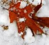 kivrin: (leaf in the snow)