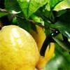 soulswallo: (Stock-Lemons!)