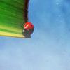 soulswallo: (Stock-Summer-Ladybug)