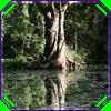 belenen: (tree wisdom)
