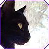 belenen: (kanika kitty)
