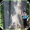 belenen: (tree elder)