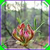 belenen: (plant magic)