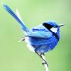 ravenelvenlady: (bird)