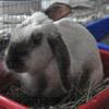 bunnyhero: (Default)