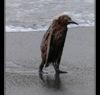 ettegoom: (Fuck it penguin)