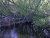 underthewillows: (river willows)