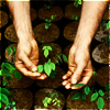 red_eft: hands holding a seedling (getting your hands dirty)