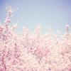 miilk: (/ tree)