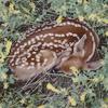 miilk: (/ deer)
