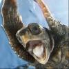 sceaterian: (Turtle WTF)