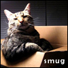 telophase: (cat - Sora smug in box)