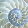 noli_me_tangere: (nautilus)