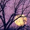 raveninthewind: (Tree Full Moon)