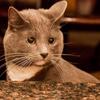 arspoetica: (Cat lady)